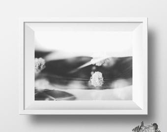 Black feather and Babies Breath Abstract and Whimsical photography print wall art