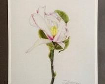 Original Botanic Digital Art Print Magnolia Blossom