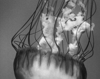 "Black and White Jellyfish Print - dark gray jellyfish 8x10 prints underwater 26x24 11x14 jellyfish art large wall art 5x7 photo - ""Bullet"""