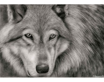 Art Print of A Wolf - Original Pencil Drawing by Lini