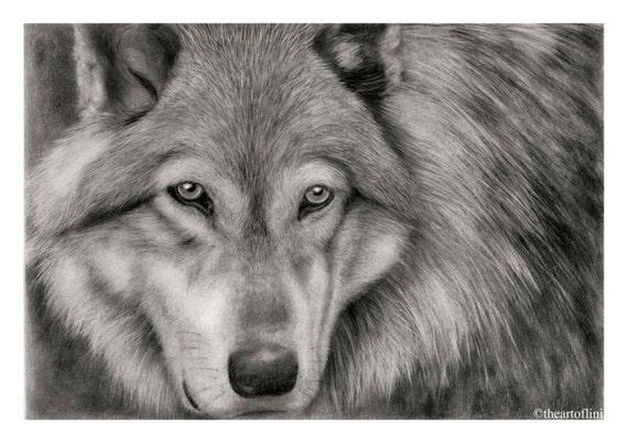 Stampa artistica di un lupo originale matita disegno di lini for Lupo disegno a matita