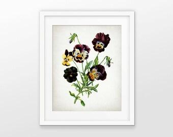 Pansy Flower Art Print - Pansy Plant Decor - Botanical Flower - Pansy Garden Plant - Botanical Print - Single Print #1753 - INSTANT DOWNLOAD