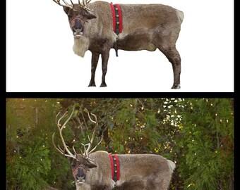 Reindeer Games Overlay