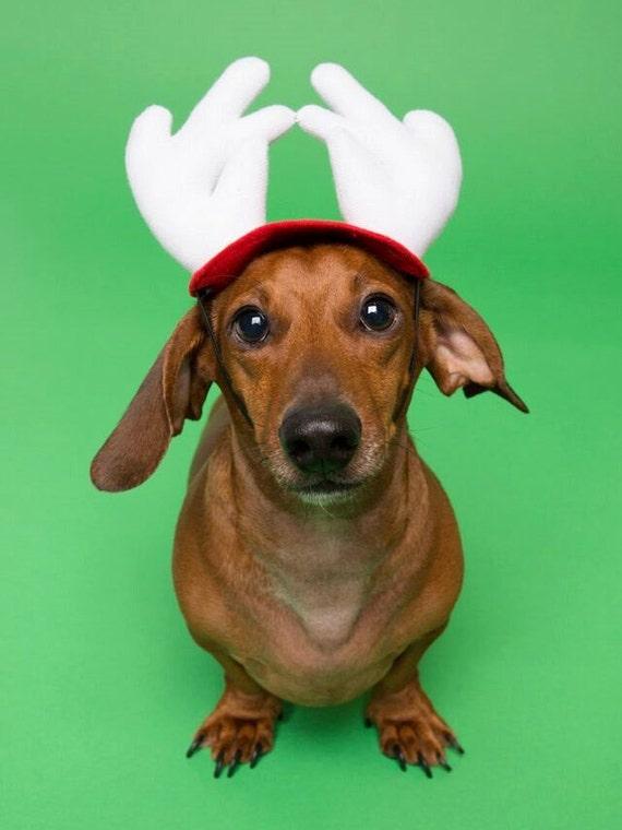 Pet Dog Christmas Antlers
