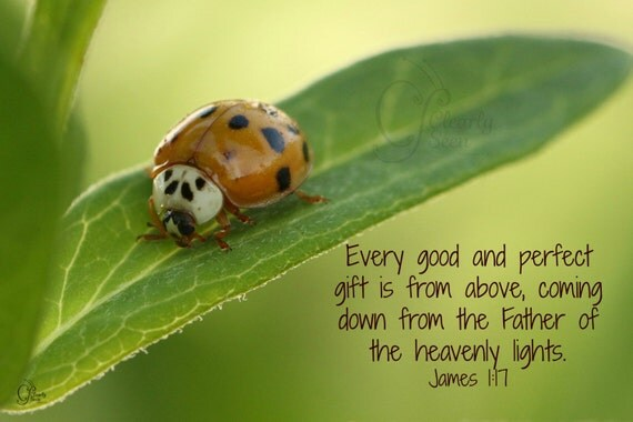 1. Photo greeting card; Ladybug on Milkweed; Insect; Nature Art print; Gift; Inspirational Scripture James 1:17
