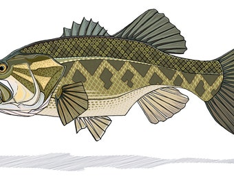 Largemouth Bass Print