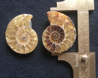 Ammonite Fossils 31mm - 1 pair sold together