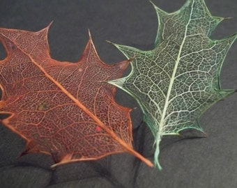 Holly Leaf Skeletons; Dyed, One Red & One Green, For Crafts or Decor