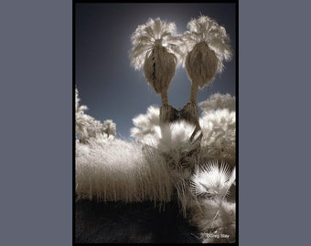 Twin Palms, Thousand Palms California.  Infrared Fine Art Photography, Metallic Paper  / Metal Print