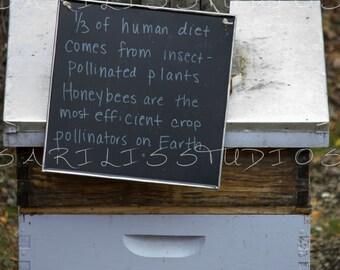 Honey Bee Photography Millennium Park Chicago Illinois High Quality Giclee Print by SarilisStudios