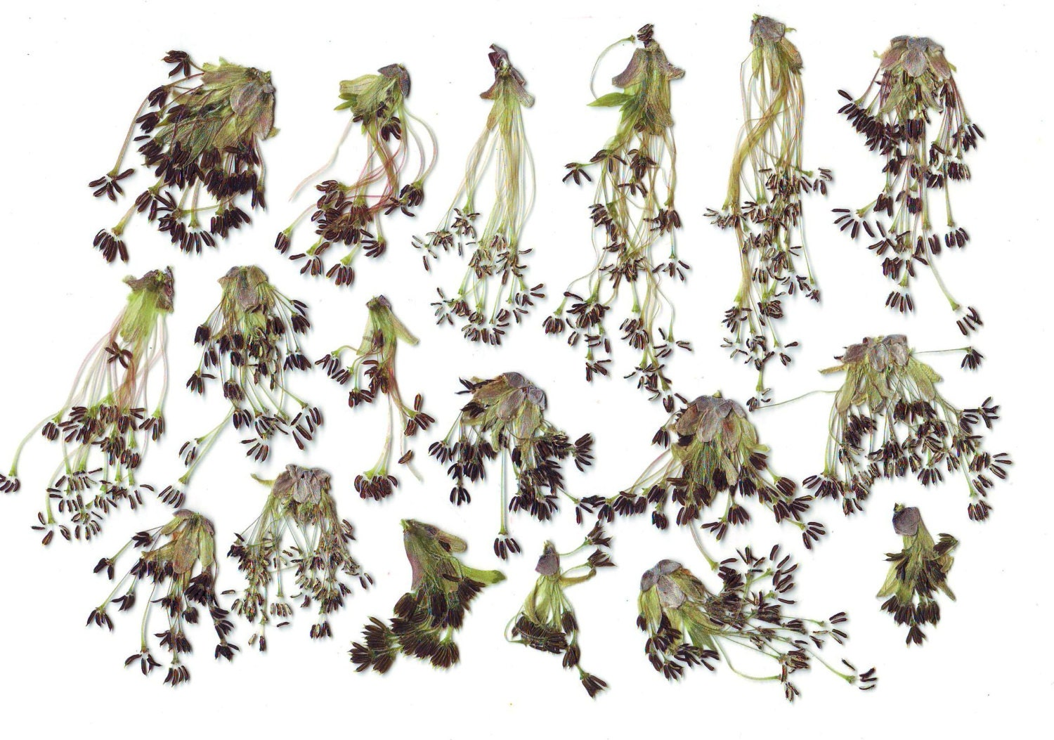 How to scrapbook dried flowers - Sold By Artsyniakinashop