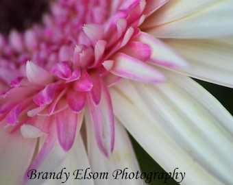 Pink Daisy Full Color Photography Wall Decor Home Decor Bedroom Decor Office Decor Flower Photo Art Bold Color Art