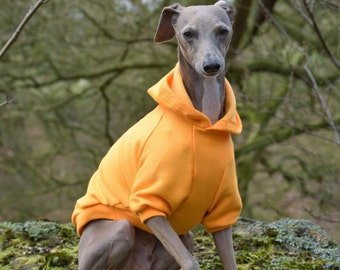 Sunshine Yellow Hoodie for Italian Greyhounds
