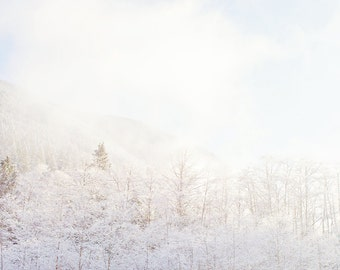 """Snowy Pastel Landscape Photograph, Minimalist, Frost, Trees and Mountains Large Wall Art """"Pastel Frost"""""""