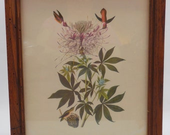 SALE!!! Framed Audubon Print Nice Frame!