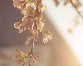 Floral Print, Sunlit Photograph, Flowers, Nature Photograph, Botanical Photograph