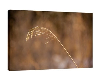 Prairie farm grass Canvas Wall Art