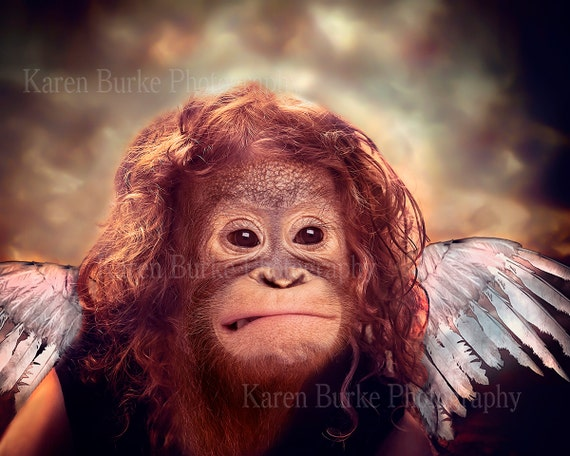 Funny Angel Portrait Orangutan Animal Morph By