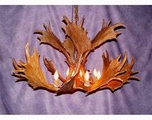 Reproduction Antler Fallow Deer Chandelier Light RL-19, Rustic