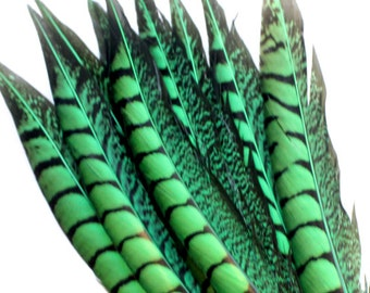 11-13 Inch Green Lady Amherst Feathers. (5) Green Pheasant Tail Feathers. Long Green Bird Feathers. Green Feathers for Wedding Decoration
