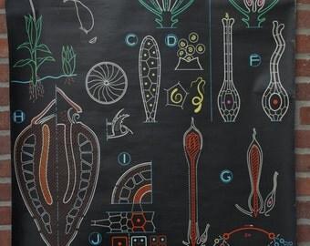 Vintage  Pull Down Chart Botanical Flowers School Chart