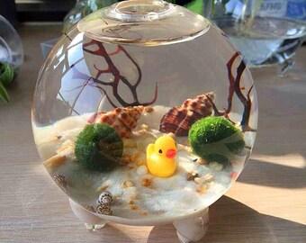 "Marimo Aquarium Terrarium  - Tall 4"" footed glass bowl/moss ball,white sand,river gravel,sea shells and sea fan"
