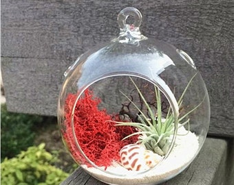 "Hanging air plant kit with 4"" round terrarium,beach sand,sea fan,ionantha tillandsia airplant,seashell,red dry moss-gift for her mom"