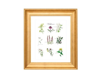 Botanical Fine Art Collection