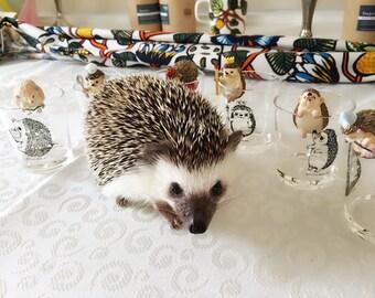 Iwasaki Full Set 6 Miniature Hedgehog