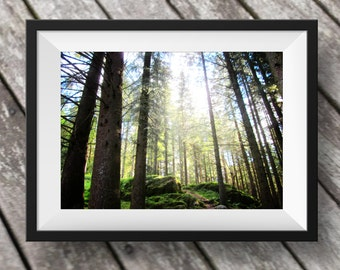 Forest Nature landscape tree photo, Fine Art Photography, Instant Download, Norway photo, travel photo, Digital Download