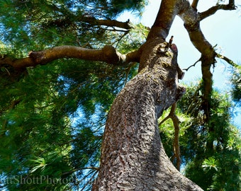 Nature's Majesty, Tree, Blue Sky, Nature Photography, Home Decor, Nature Wall Art