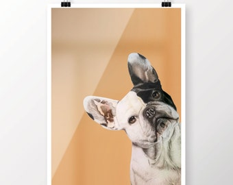 Realistic and original a bulldog portrait printing