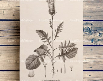 Botanical print, Printable artwork, Botanical illustration, Vintage graphics, Thistle clip art, Thistle print, Botanical PNG JPG 300dpi