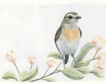 Bird on branch print