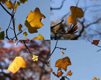 Yellow Leaves 3