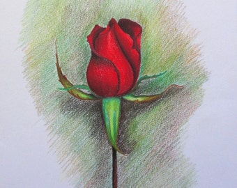 Original color pencil - the solitary rose drawing-