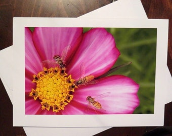 Three Bees. Photo Greeting/Note Card. Blank Inside.