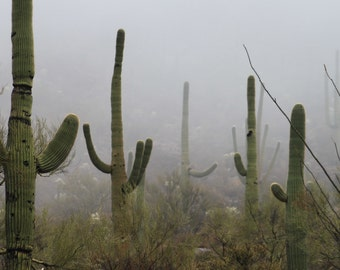 Sonoran Desert Saguaro Fine Art Photography