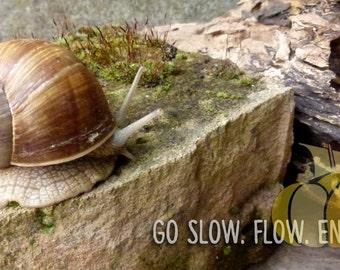 go slow postcard