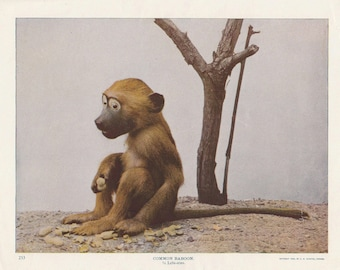 Creepy Taxidermy Baboon Antique Vintage Print