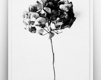 Plant hydrangea print , Black & white art, Romantic poster, Scandinavian, Photographic art, Wedding, Anniversary
