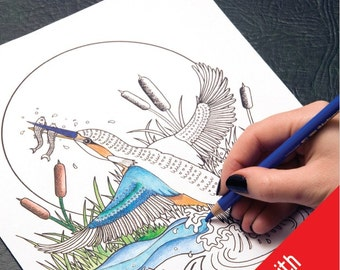 SALE, Adult Colouring Book, bird colouring book, Birds of the world, saddle stitched, for pens and pencils - by Kez Herbert
