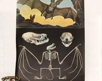 Bat Anatomy Banner