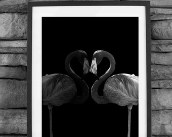 Flamingo art print photography, black and white, instant download, animal photography, animal wall art, decor print, double flamingo,