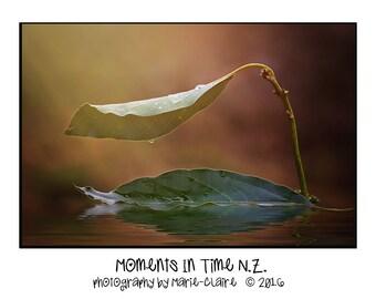 Moments In Time Newborn Leaf Boat Digital Background