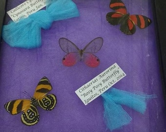 Three Butterfly Mount in Shadow Box Frame