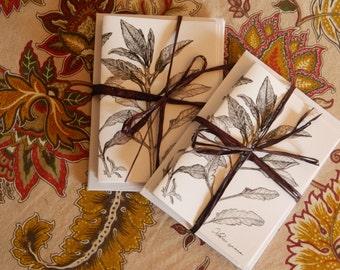 White sage botanical illustration notecards- set of four