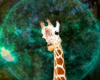 Giraffe Animal and Space Photography Print