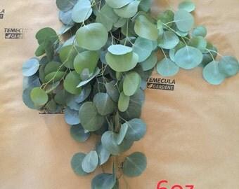 Fresh Eucalyptus FREE SHIPPING Organic Natural  Sauna Shower Decongestion