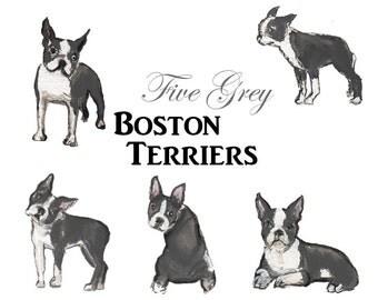 Five watercolor Boston Terriers - grey